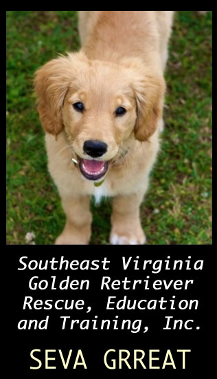 SEVA GRREAT - Adopt a golden